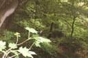 Spring rains brought heavy vegetation