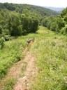 Atop Log Cabin Hill