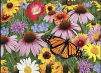 Planting wildflower seeds